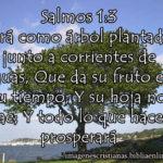 Imagen con  Salmos 1:3 … Y todo lo que hace, prosperará