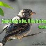Frases de Alegría Cristiana con imágenes