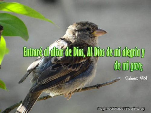 Frases de Alegria - Cristianas