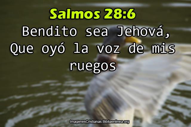 Salmos de dia en Imagen
