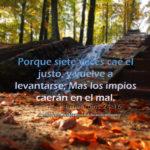 Un justo se cae y se levanta (#Proverbios del dia)