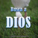 Frases Cristianas: Busca de Dios