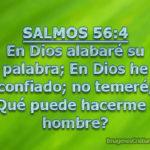 Salmos 56:4 En Dios alabaré su palabra; En Dios he confiado
