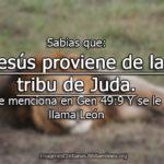 Imagenes cristianas León de Judá