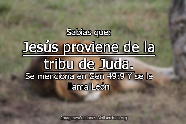 El leon de Juda