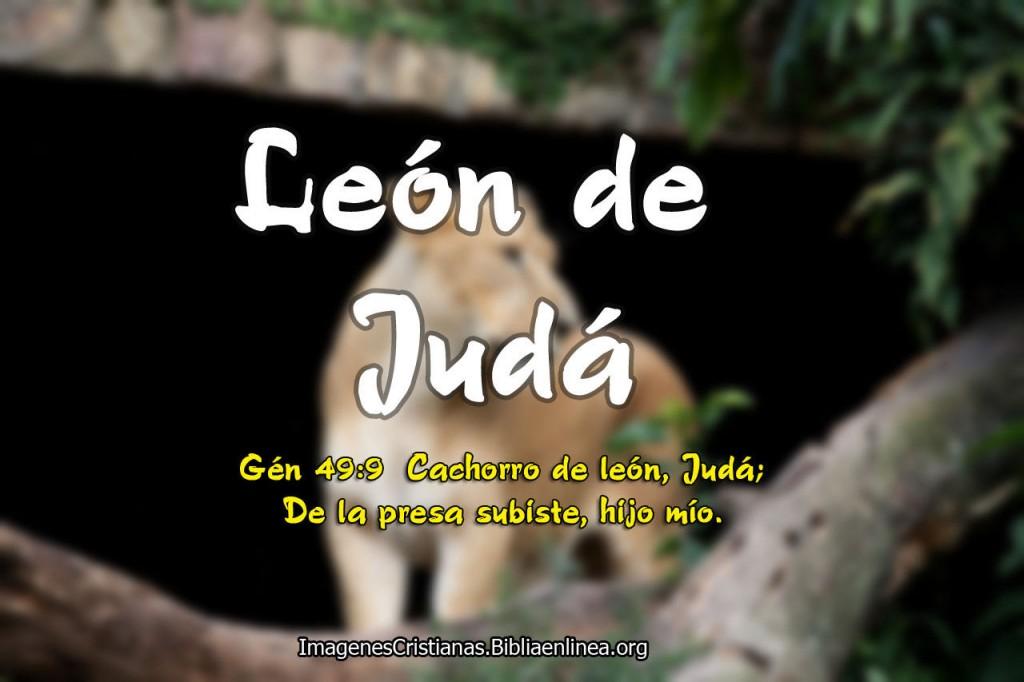 Leon de Juda Imagenes