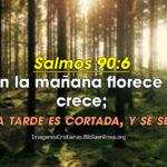 Reflexiones de Salmos: En la mañana florece y crece; A la tarde es cortada