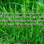 Salmos: el hombre como la hierba que perecen