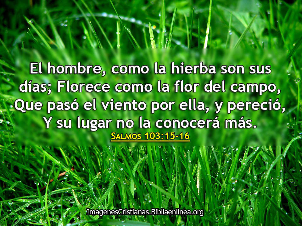 como-la-hierba-es-el-hombre-imagenes-cristianas