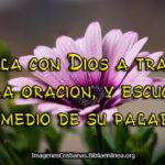 Imagenes de flores con frases cristianas