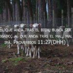 Proverbios 11:27 e imágenes: El que anda tras el bien