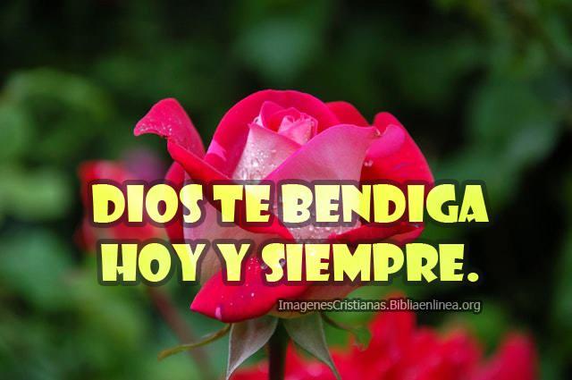 Imagenes para compartir con rosas y frases dios te bendiga