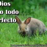 Imagen cristiana de Dios lo hizo todo perfecto