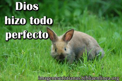 Dios lo hizo todo perfecto