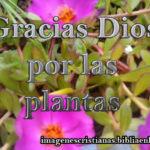 gracias Dios por las plantas