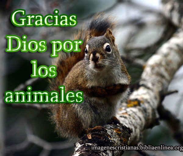 gracias Dios por los animales