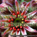 Imagen Cristiana Dios te bendecirá
