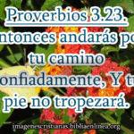 Proverbios 3:23 Entonces andarás por tu camino confiadamente, Y tu pie no tropezará.